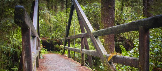 Redwoods-69